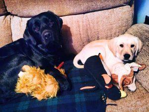 'cuddle buddies'